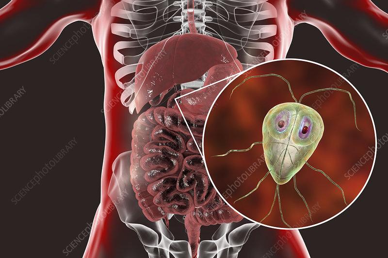 giardia bacteria in humans