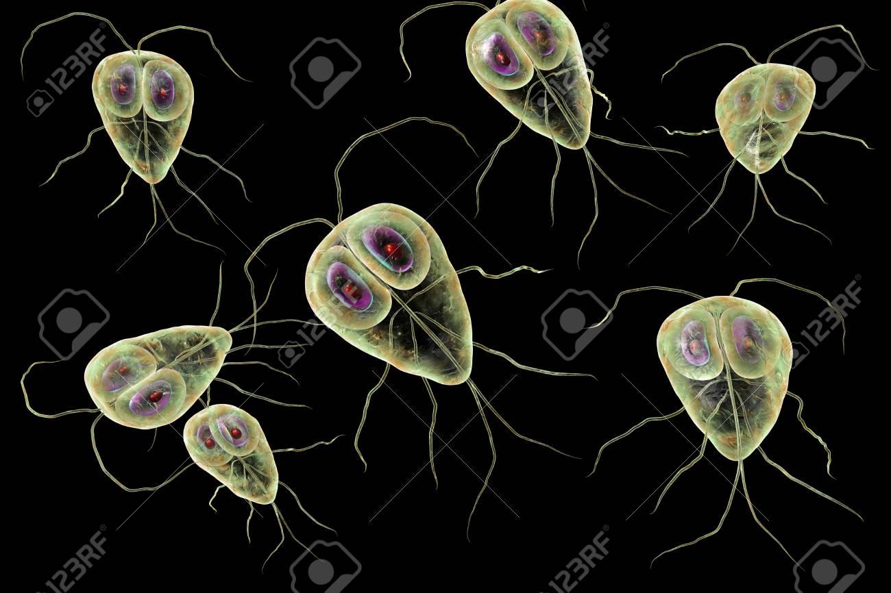 lamblia fekély paraziták alternatív kezelések