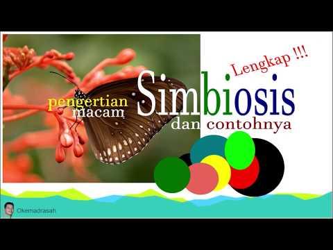 Tetramiszol férgek gyógyszere, Bélférgesség tünetei és kezelése - HáziPatika
