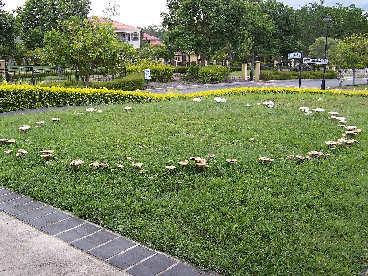 a gombák lehetnek szaprobák és paraziták