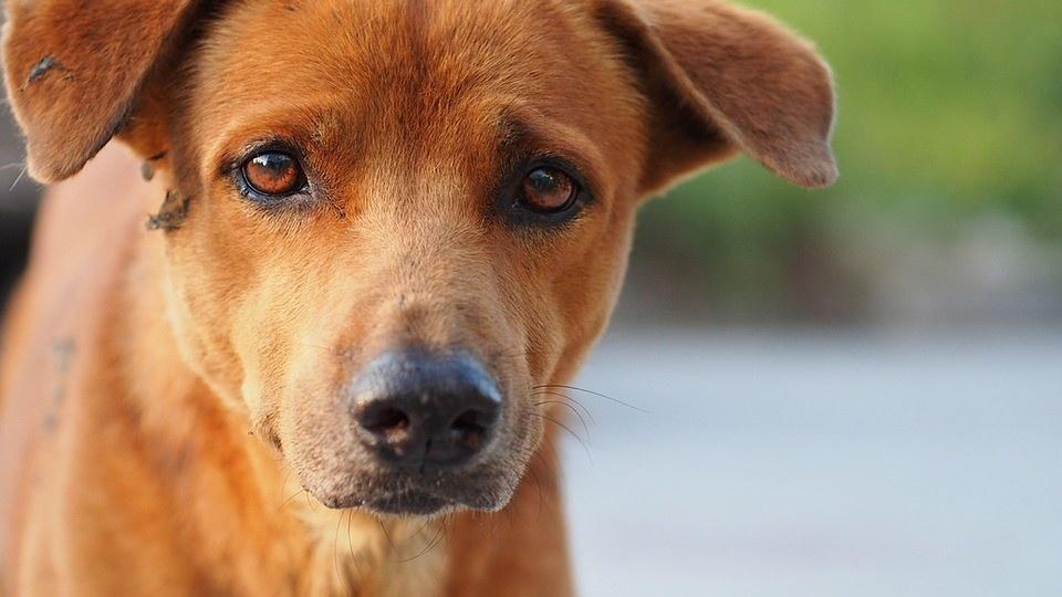 Giardia hond ervaringen. Giardia klachten bij mensen - relaxatours.hu