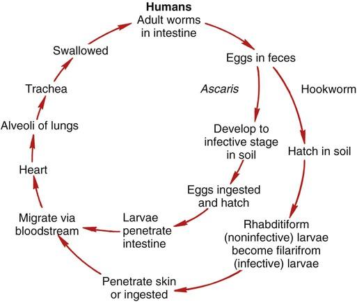az ascaris fertőzés megelőzésének fő intézkedése a