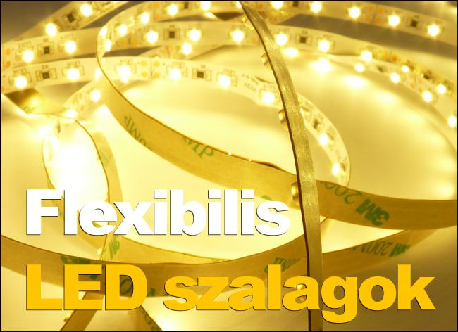 Echinococcosis betegség: szakaszok. Echinococcus életciklusa