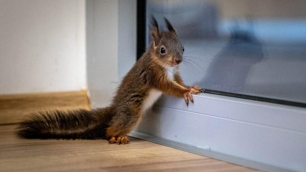 mókusszag a szájból