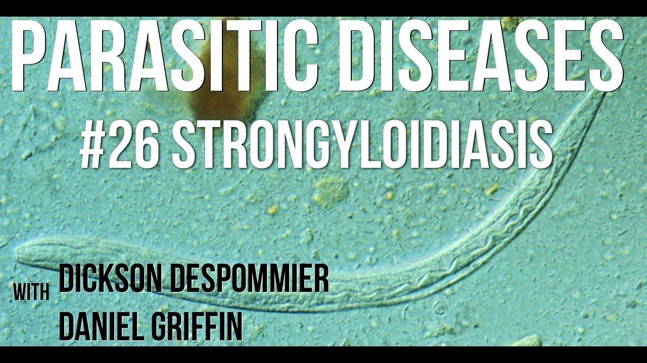 a strongyloidiasis elterjedt jó gyógyszerek a férgek számára