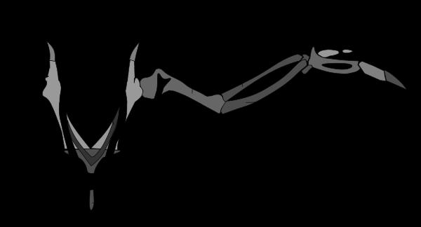 giardia parasite chien