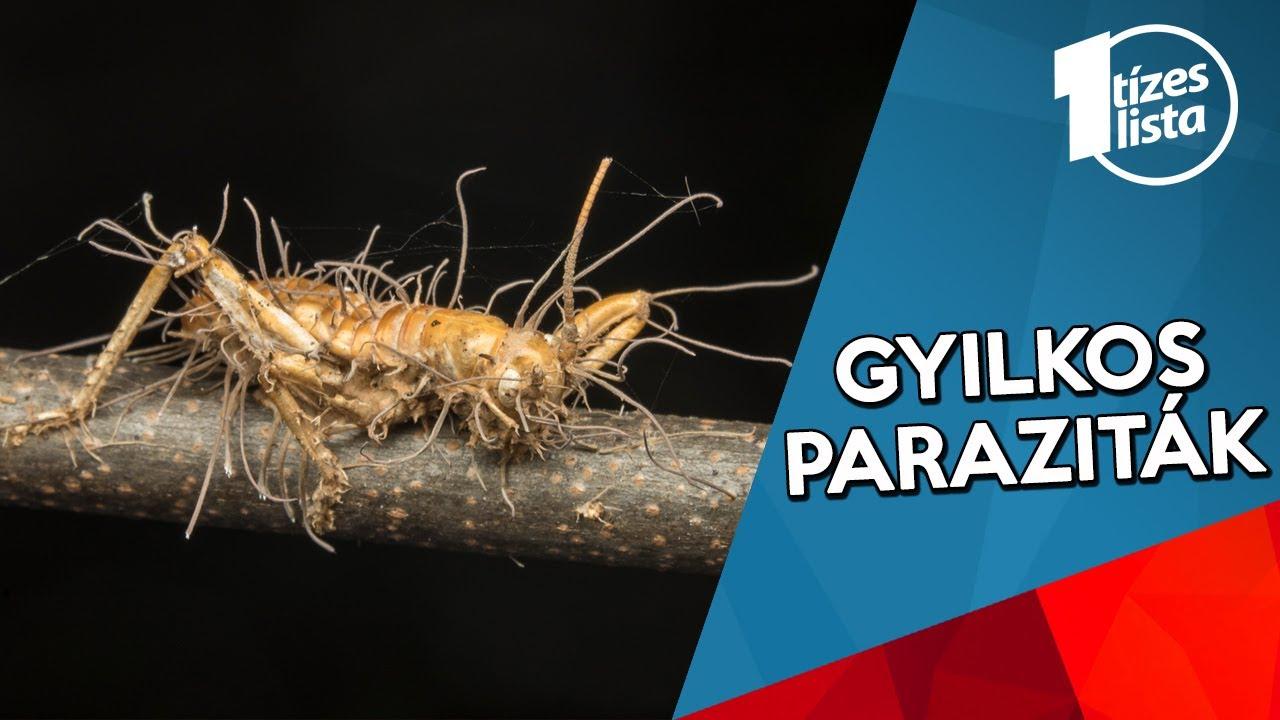 kerekes féreg paraziták képei