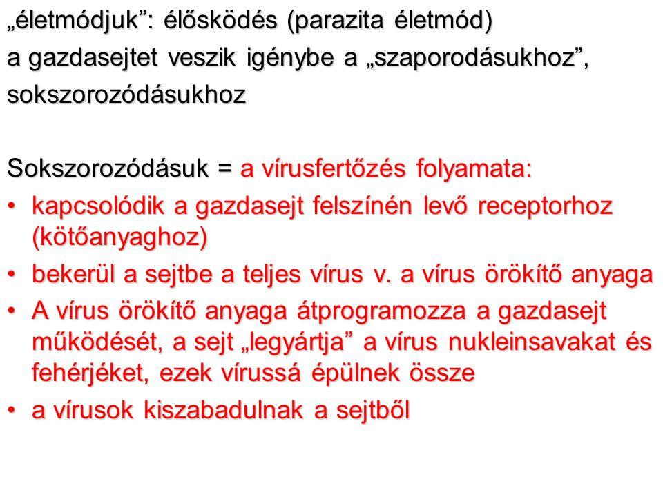 paraziták által okozott fertőzések fergek kiutasitasa