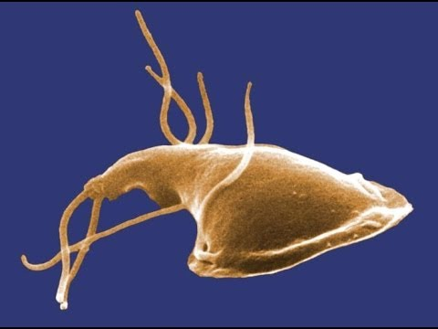 Can giardia be in well water, Cryptosporidiosis and giradiasis in Pawi, northwest Ethiopia