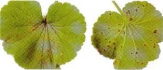 parazita a leveleken orrból víz és rossz lehelet
