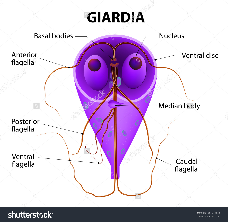 giardiasis klinikai ajánlások