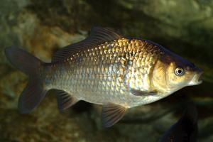 Milyen halat lehet nyersen fogyasztani? - Vitaminok