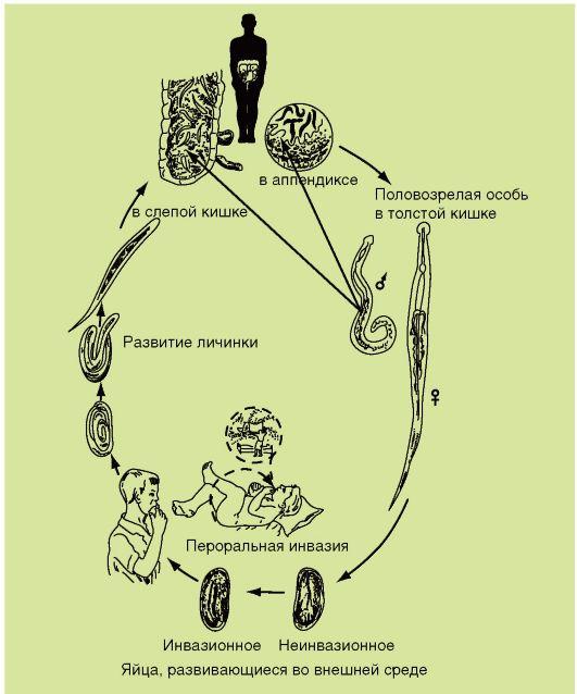 emberi paraziták kezelése népi gyógyszerekkel