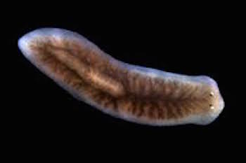 széles szalagú fertőzések megelőzése korbféreg életciklusa