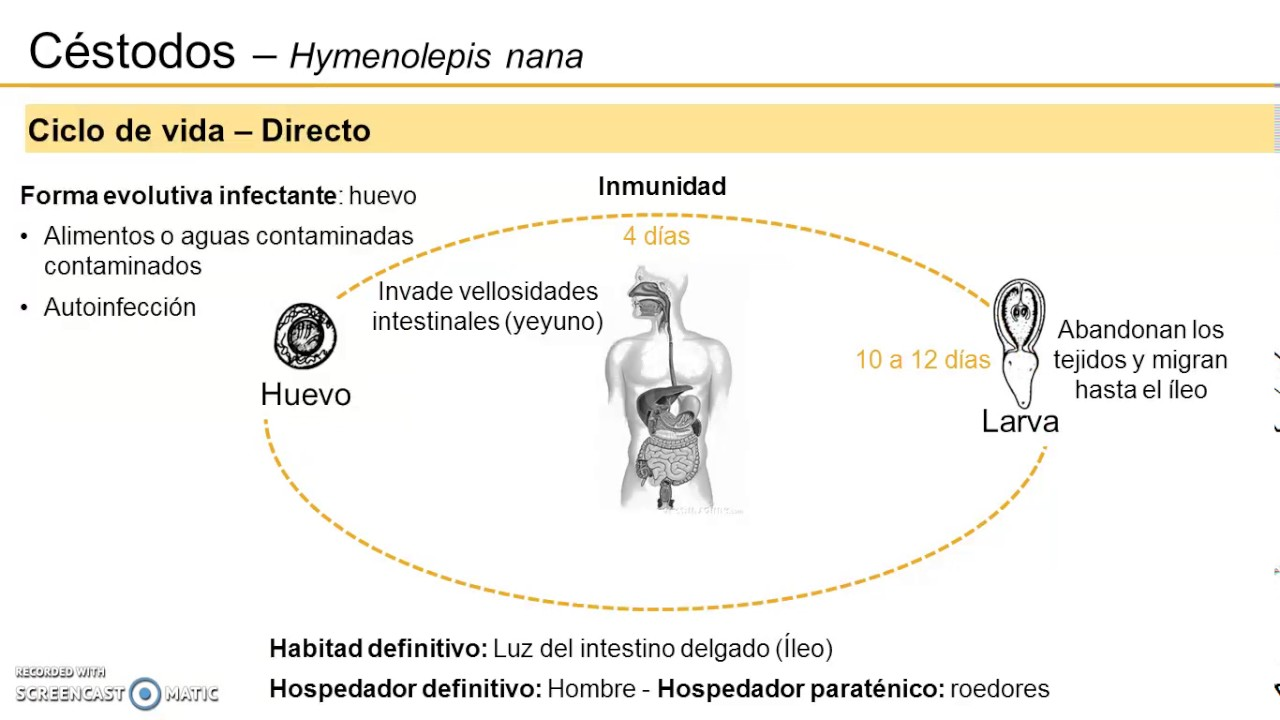 Aszcariasis fertőzés módszerei. Immunitás - a férgek megelőzése - Hymenolepidosis életciklusa