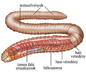 honnan származtak a pinworms ek szagtalan takony és rossz lehelet