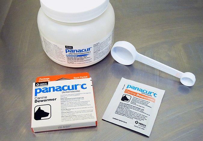 giardia parasite contagious