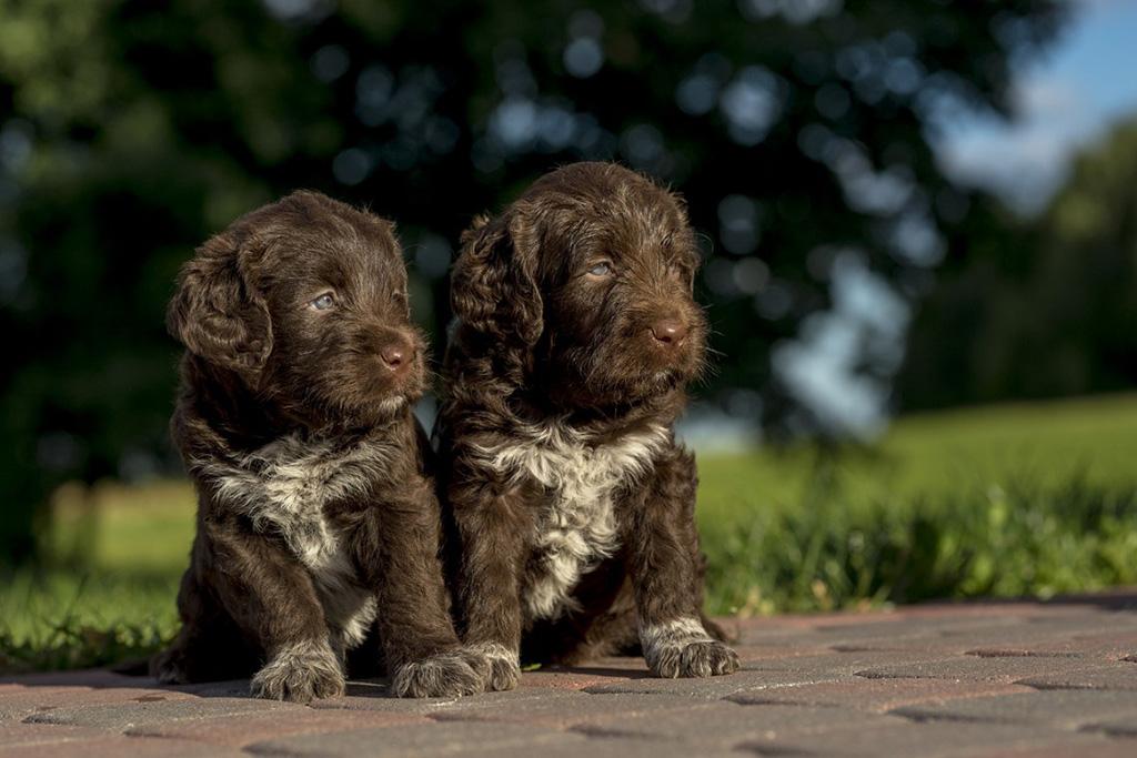 giardia cane cucciolo