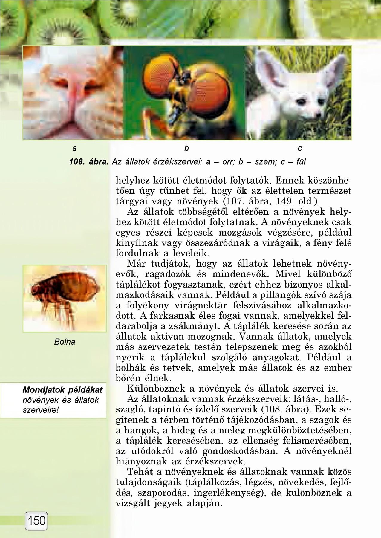 top készítmények férgek számára hol kezdje megtisztítani a parazitákat