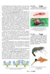 A féreg elsődleges ürege. coelom | English to Hungarian | Zoology