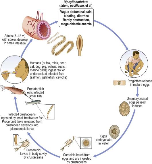 a diftillobothriasis otthoni parazita gyógyszer vásárolni