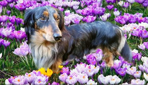 Giardia hond forum.