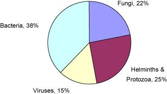 Férgek = kerek férgek Enterobiosis radar