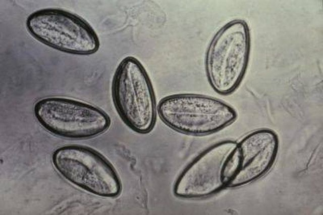 férgeknek férgektől; felnőttkori tabletták megelőzése