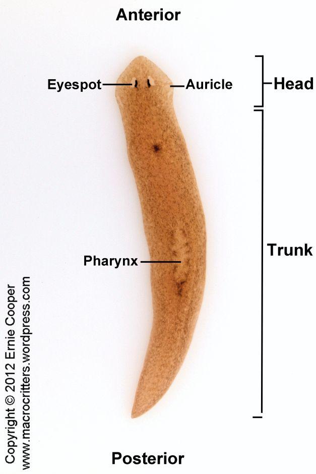 ízületekben élő paraziták ha a gyermeknek férgek tünetei vannak, kezelése