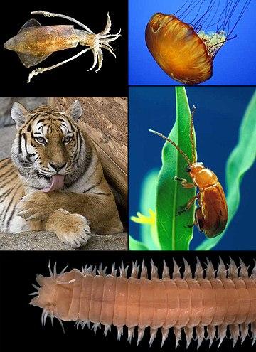 a paraziták és a ragadozók egyaránt