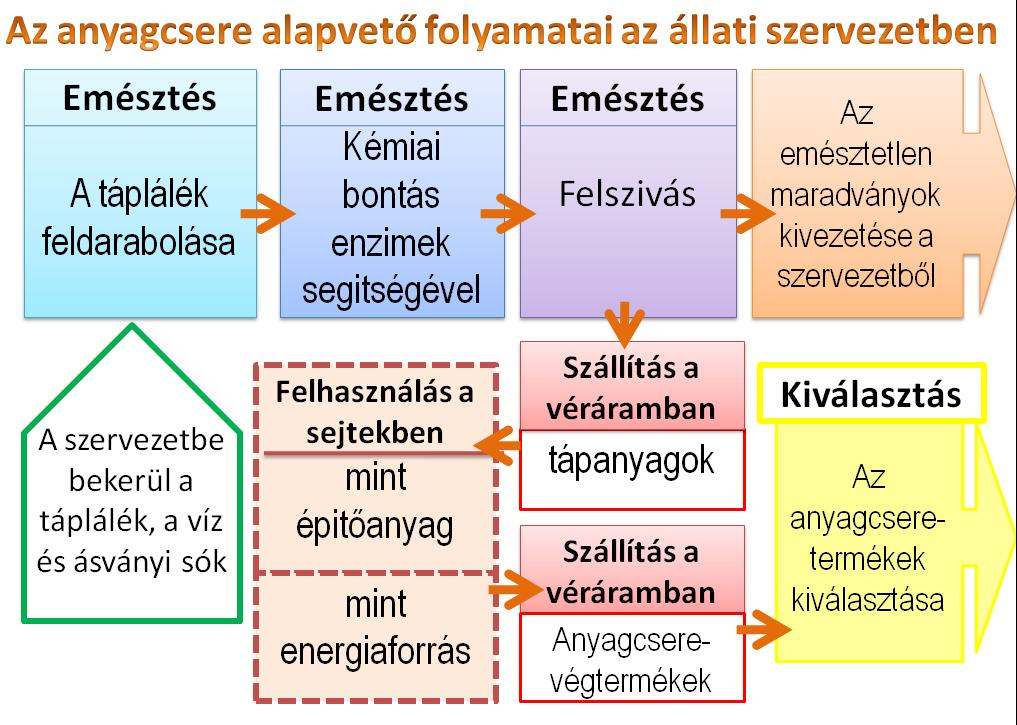 Heterotrófia – Wikipédia