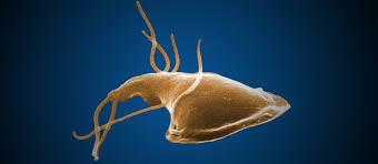 Giardia/Cryptosporidium antigén kimutatása székletből Kaphatok giardiasist?