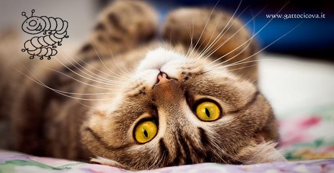 Giardia gatto incubazione