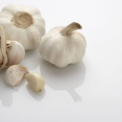 giardia raw garlic
