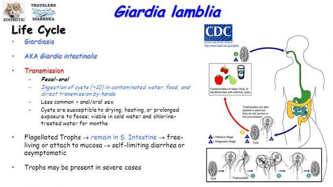 giardia serology