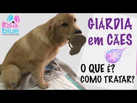 giardia sintomas cachorro tablettát férgek endogard vélemények