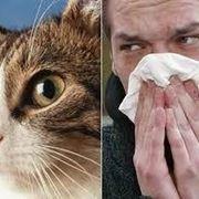 az emberi betegség parazitái