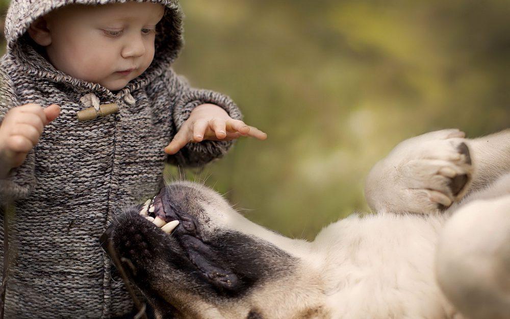 újszülött férgekben, mint kezelni állati féreg gyógyszer