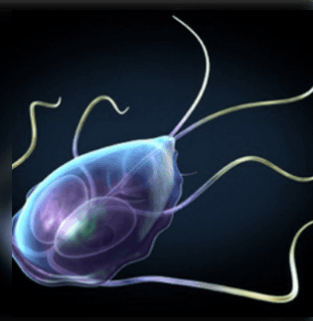 közös paraziták paraziták, amelyek miatt a rossz lehelet