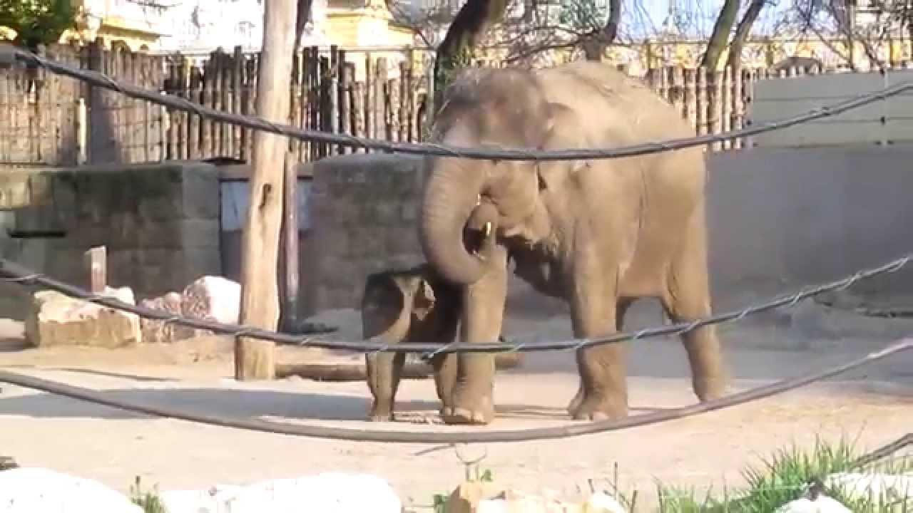 állatkert orvos tabletták férgek vélemények