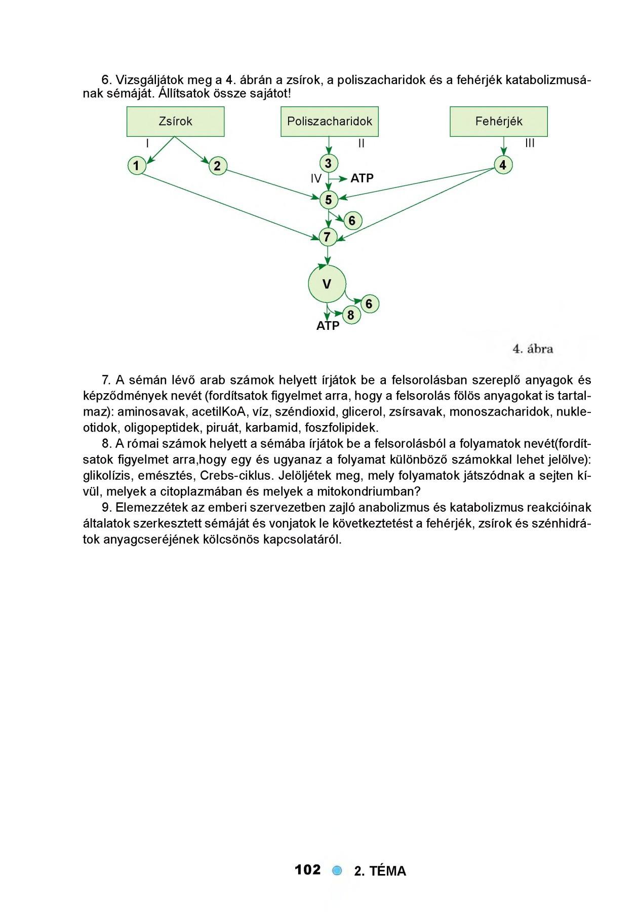 Humán genom