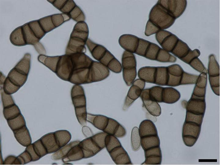 Morfologi helminthosporium solani, Teljes publikációs lista