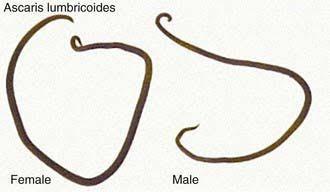 nemathelminthes biologi x gyógyszer a belek megtisztítására a parazitáktól
