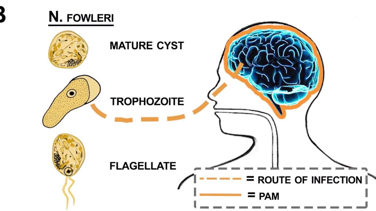 parasite giardia in humans treatment