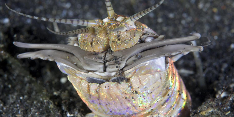 paraziták tenger