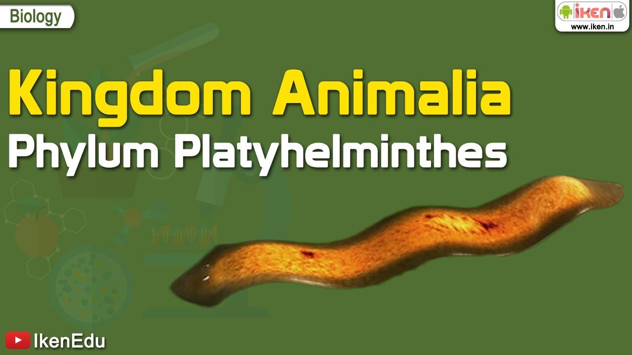 platyhelminthes phylum jelentése