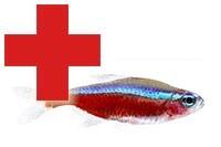 Élősködő, parazita ellen - Gyógyszer - prokontra.hu akvarisztikai webáruház