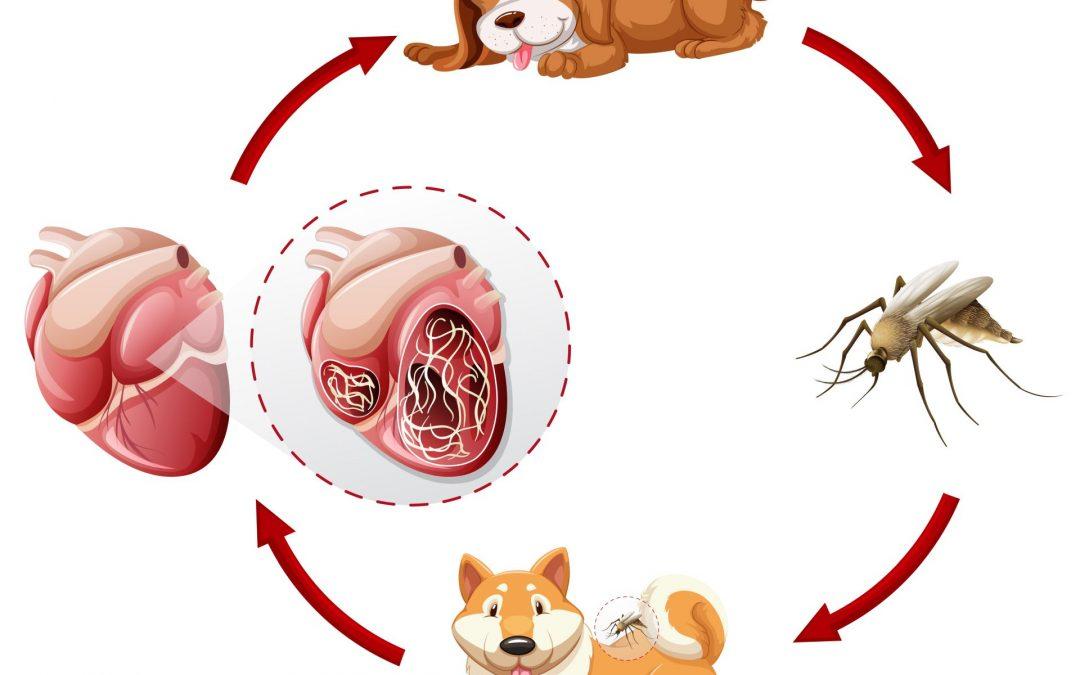 szivfergesseg teszt ara szeged