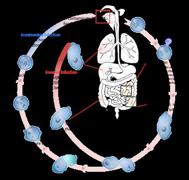 Minden az eozinofíliáról - Melanóma