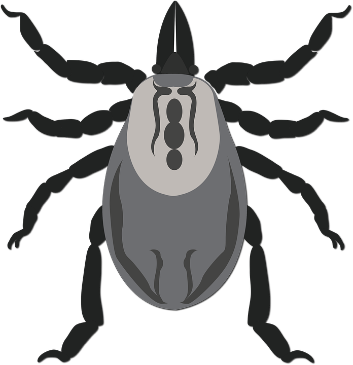 emberi kerekesférgek típusú férgek a paraziták tisztítása ellenségekkel
